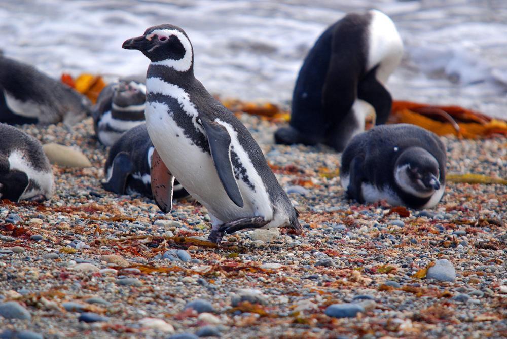 Notre guide des animaux à voir en Patagonie